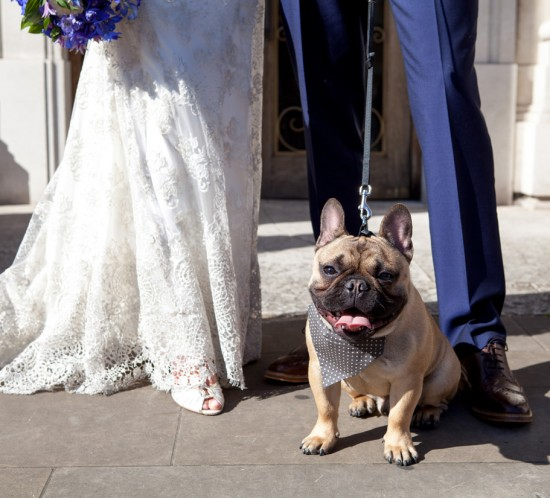 French Bulldog and Lace Wedding Dress Photography
